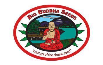 big buddha seeds autofloreceintes