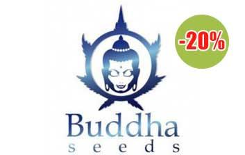 buddha seeds autofloreceintes
