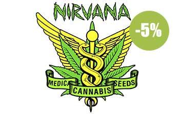 nirvana seeds autofloreceintes