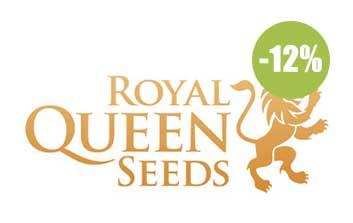 Royal Queen seeds autofloreceintes