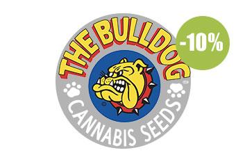 the bulldog seeds seeds auto